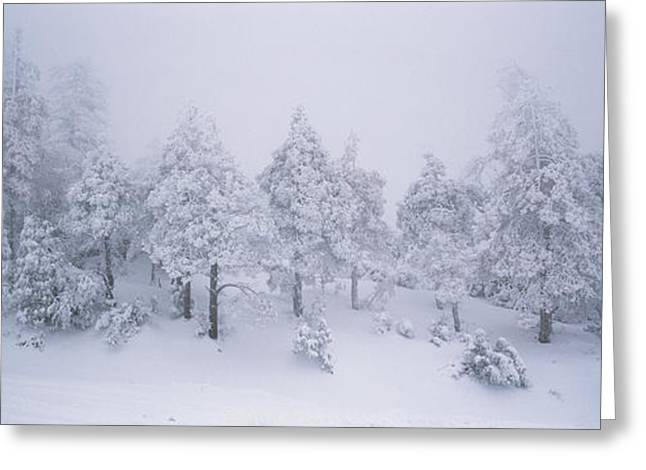 A Blizzard On Spruce Mountain Greeting Card by Rich Reid