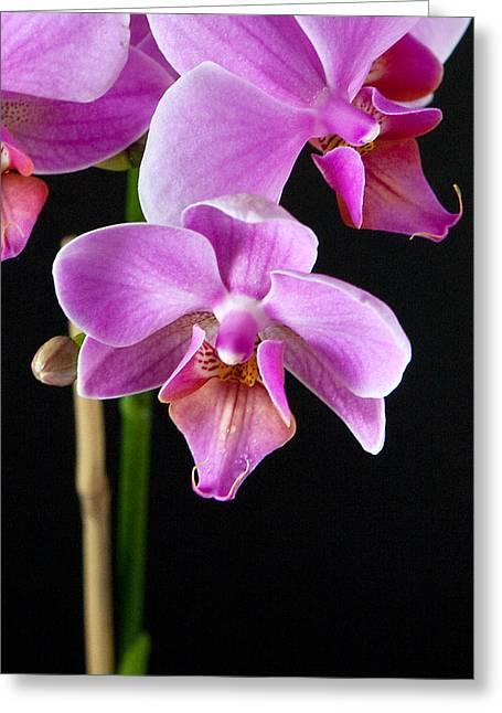 A Brilliant Orchid Greeting Card by Charlie Osborn