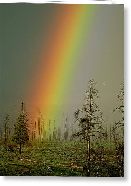 A Brilliantly Colored Rainbow Ends Greeting Card by Norbert Rosing