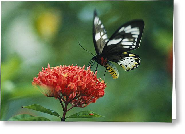 A Butterfly On A Clustered Flower Greeting Card