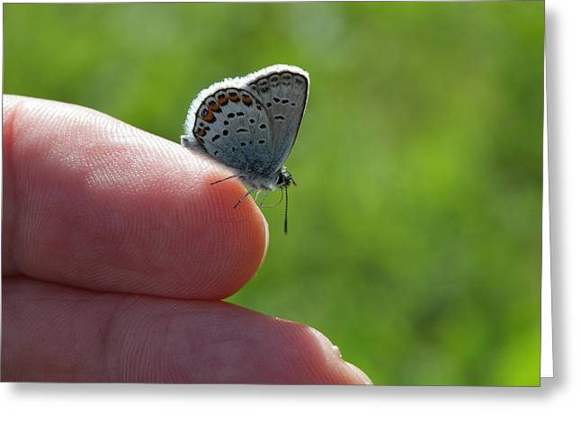 A Butterfly On The Finger Greeting Card by Ulrich Kunst And Bettina Scheidulin