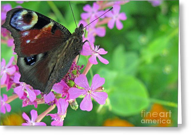 A Butterfly On The Pink Flower 2 Greeting Card by Ausra Huntington nee Paulauskaite