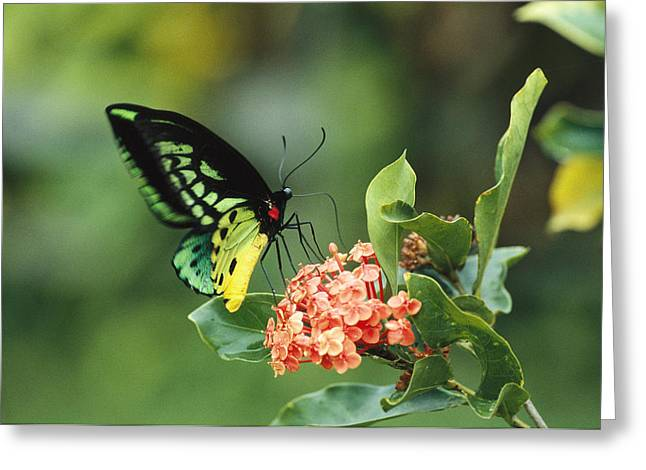 A Butterfly Perched On A Flower Greeting Card