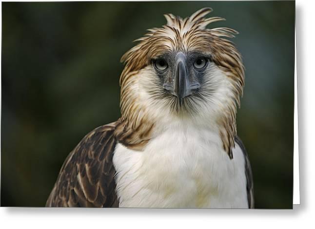 A Captive Male Philippine Eagle Greeting Card