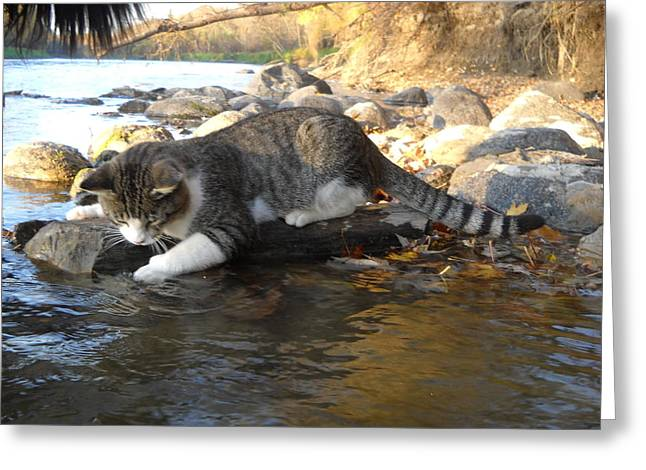 A Cat Goes Fishing Greeting Card
