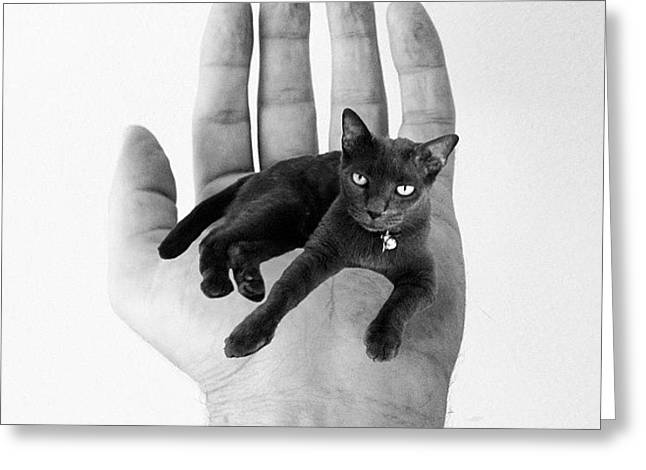 A Cat In The Hand Is Worth Greeting Card