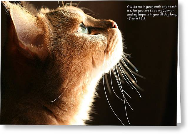 A Cat Prayer Greeting Card by Wendi Matson