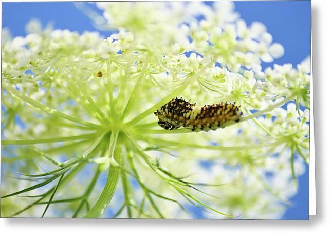 A Caterpillars Palace Greeting Card