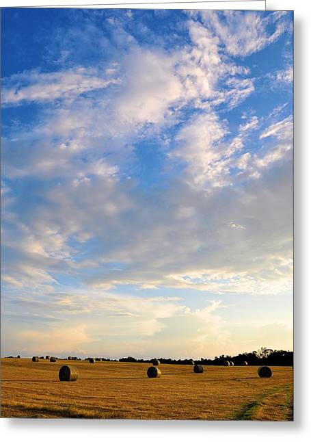 A Cause For Sunshine Greeting Card by Jan Amiss Photography