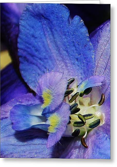 A Close Look Greeting Card by Bruce Bley