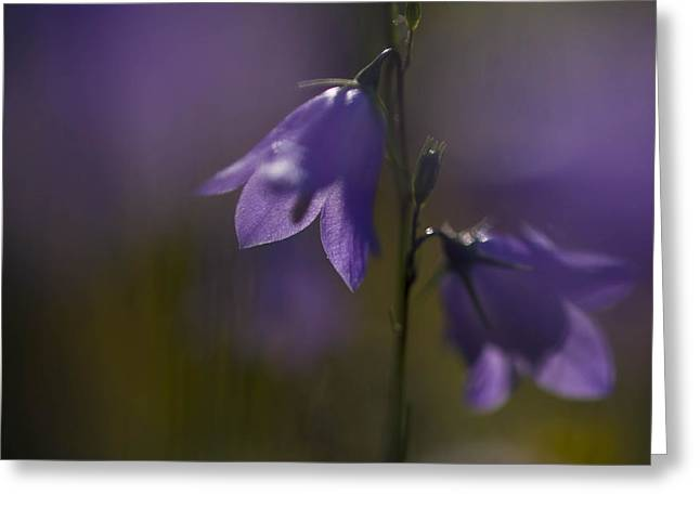 A Close-up Image Of Mountain Hairbells Greeting Card by Ralph Lee Hopkins