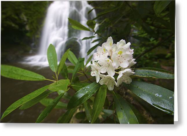 A Close Up Of A Rhododendron Greeting Card by Michael Melford