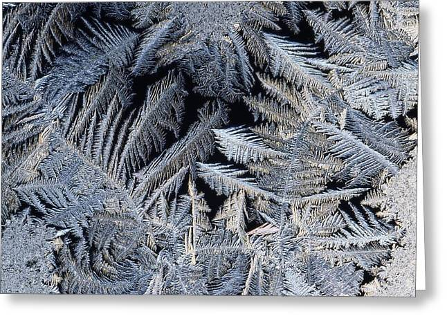 A Close View Of Frost Crystals Greeting Card by Tim Laman