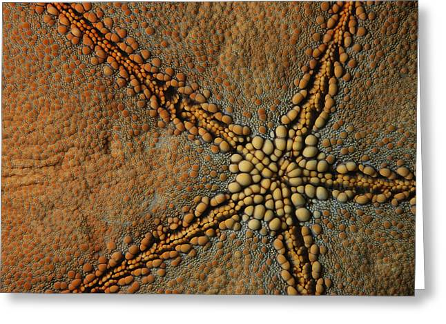 A Close View Of The Skin Of A Cushion Greeting Card by Tim Laman