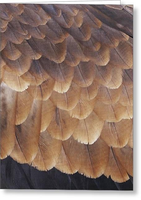 A Close View Of The Wing Feathers Greeting Card by Jason Edwards