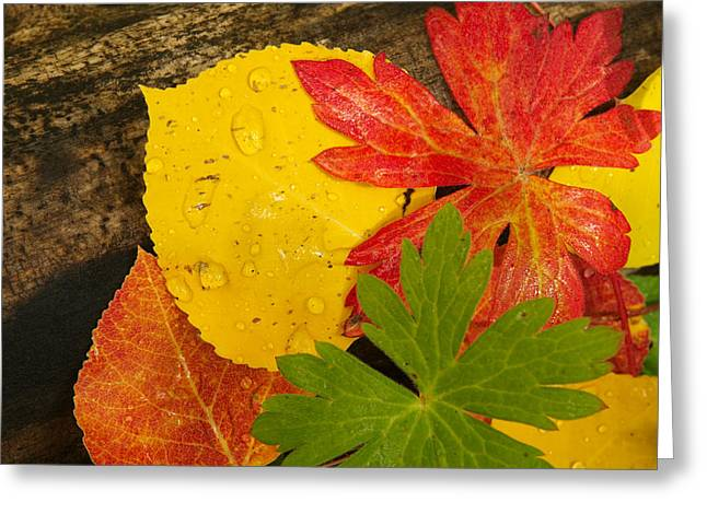 A Closeup Of Autumn Leaves Greeting Card