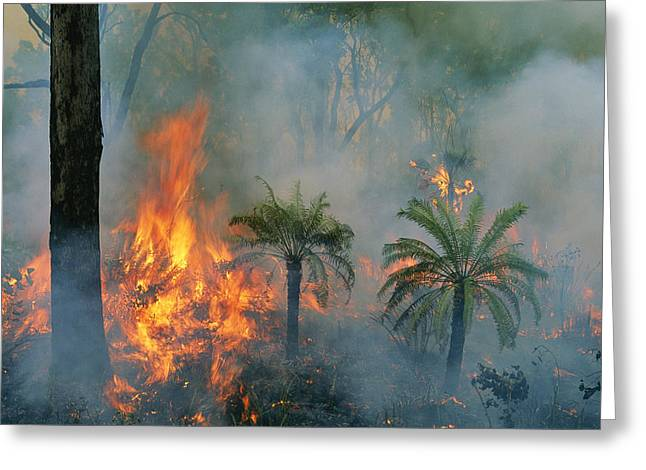 A Controlled Fire Helps Prevent Greeting Card by Randy Olson