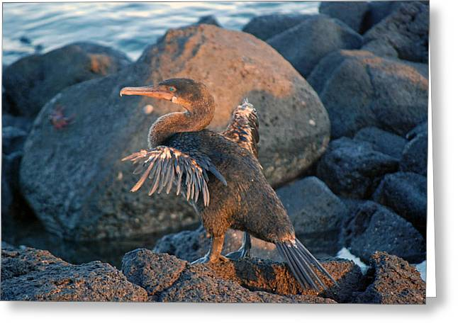 A Cormorant At Sunset Greeting Card