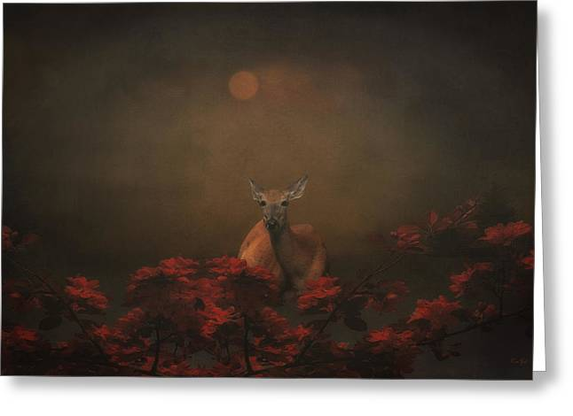 A Deer In The Sunset Greeting Card by Tom York Images