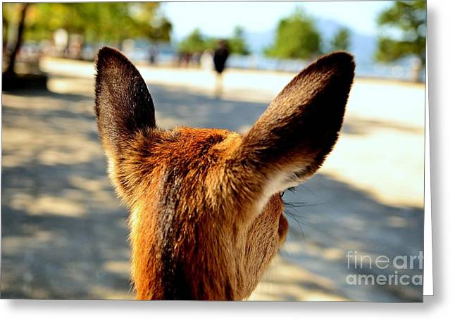 A Deer's Point Of View Greeting Card