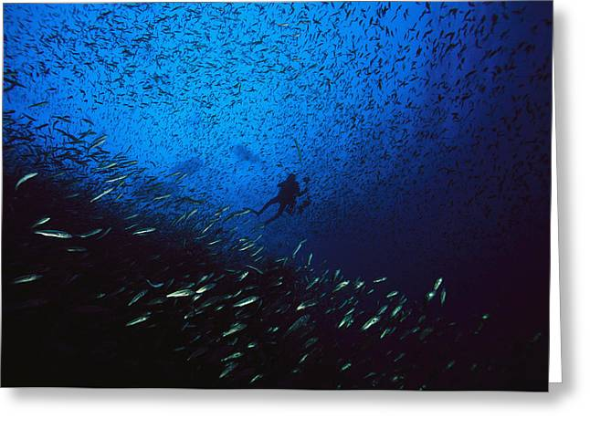 A Diver Swimming Amid A Huge School Greeting Card by Heather Perry
