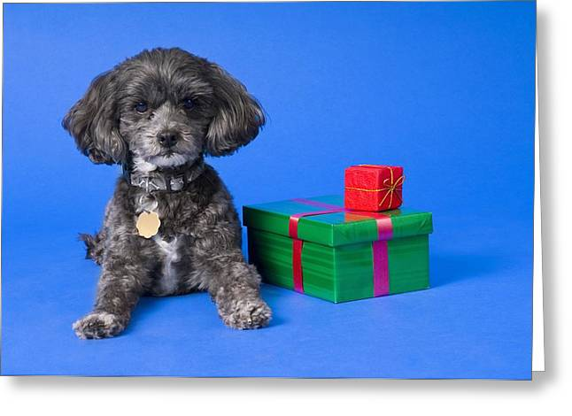 A Dog With Some Gifts Greeting Card by Corey Hochachka
