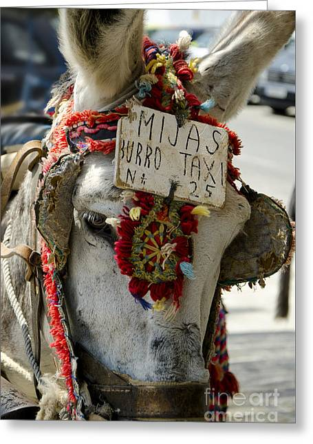 A Donkey Taxi In A Village Of Spain Greeting Card by Perry Van Munster