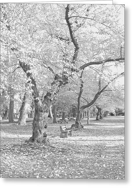 A Fall Day In Black And White Greeting Card