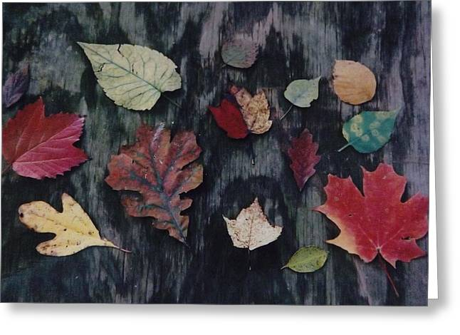 Greeting Card featuring the photograph A Fall Of Color by Gerald Strine