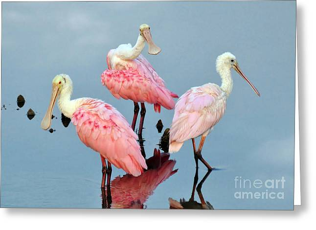 Greeting Card featuring the photograph A Family Gathering by Kathy Baccari