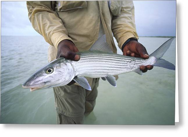 A Fisherman Holds Out A Bonefish Greeting Card by Michael Melford