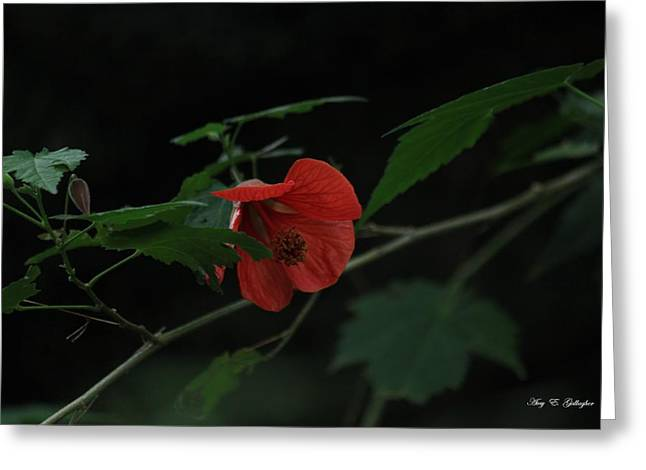 Greeting Card featuring the photograph A Flame Among The Darkness by Amy Gallagher