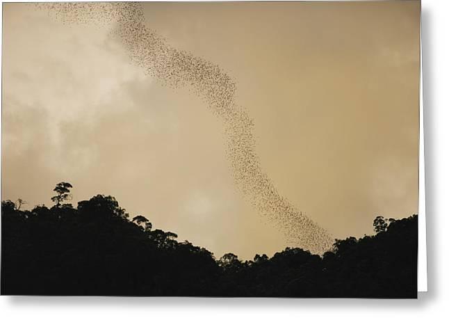 A Flight Of Bats Streams From A Dark Greeting Card by Mattias Klum