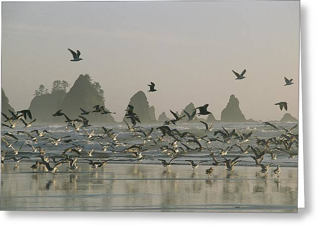 A Flock Of Gulls On A Beach With Sea Greeting Card by Melissa Farlow
