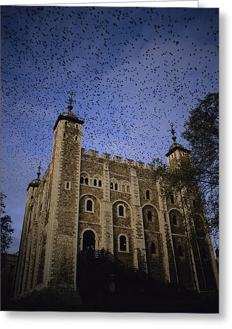 A Flock Of Starlings In Flight Greeting Card by Jonathan Blair