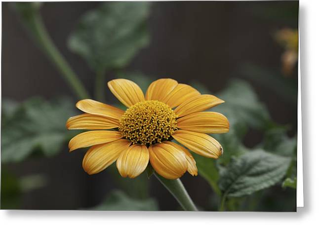 A Flowers Flower Greeting Card
