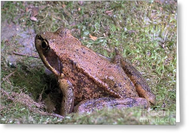 Greeting Card featuring the photograph A Friendly Frog by Chalet Roome-Rigdon