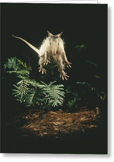 A Fright Reflex Propels This Armadillo Greeting Card