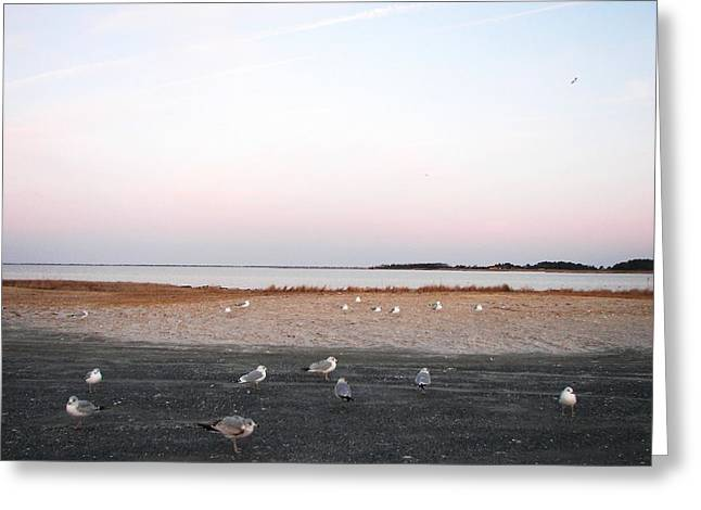 Greeting Card featuring the photograph A Gathering On Rehoboth Bay by Pamela Hyde Wilson