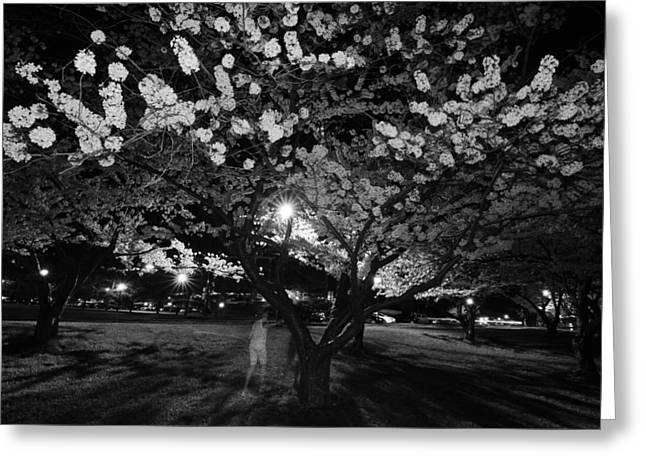 A Ghost In The Cherry Blossoms Greeting Card by Shirley Tinkham