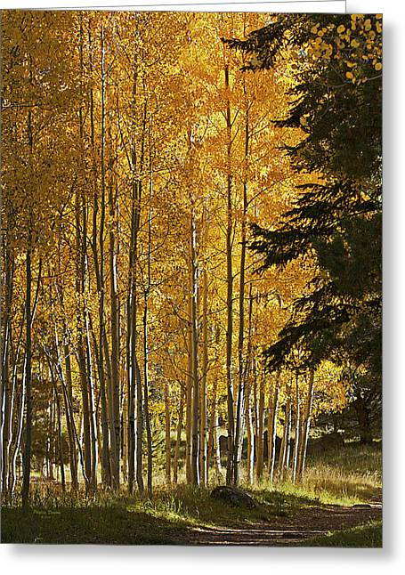 A Golden Trail Greeting Card