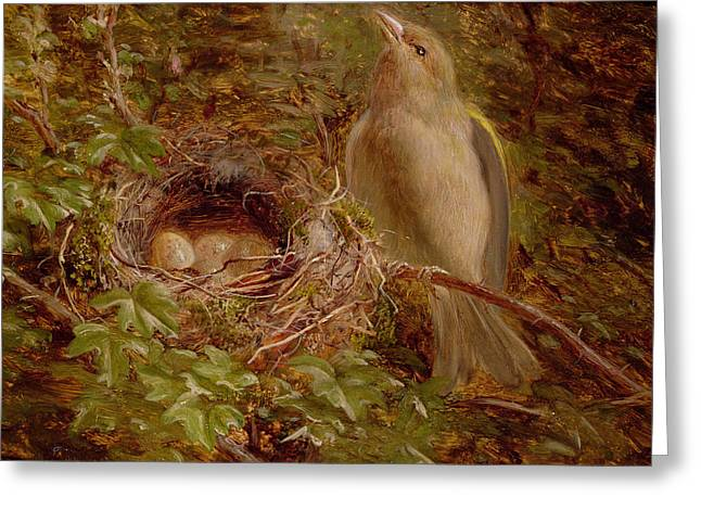 A Greenfinch At Its Nest Greeting Card by William Hughes