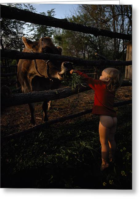 A Half-naked Toddler Feeds A Cow Grass Greeting Card