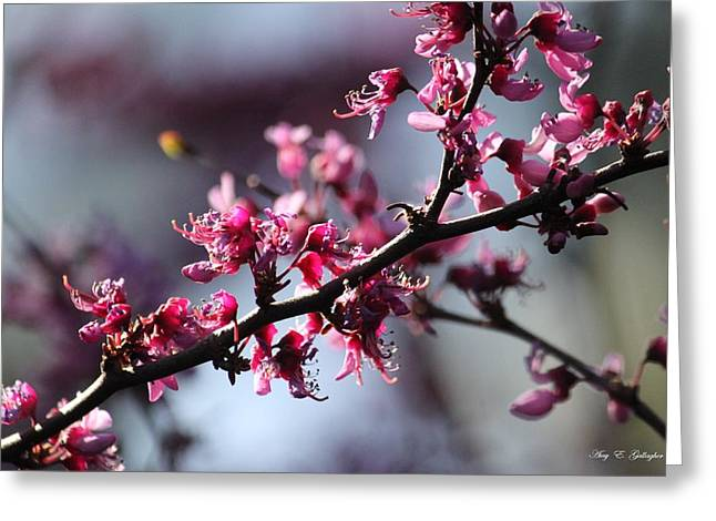 Greeting Card featuring the photograph A Hint Of Spring  by Amy Gallagher