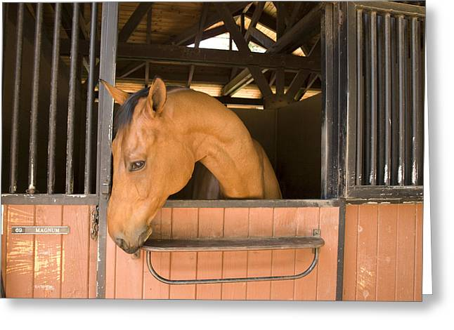 A Horse In Its Stable Greeting Card