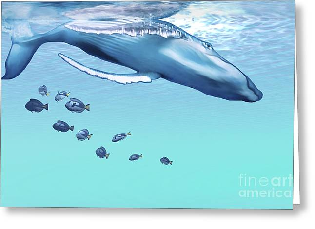 A Humpback Whale Dives Into The Blue Greeting Card by Corey Ford