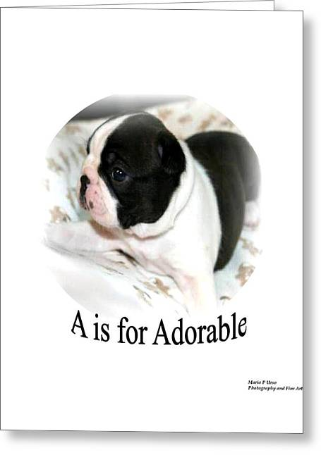 A Is For Adorable Greeting Card by Maria Urso