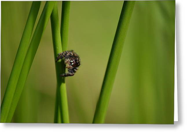 Greeting Card featuring the photograph A Jumper In The Grass by JD Grimes