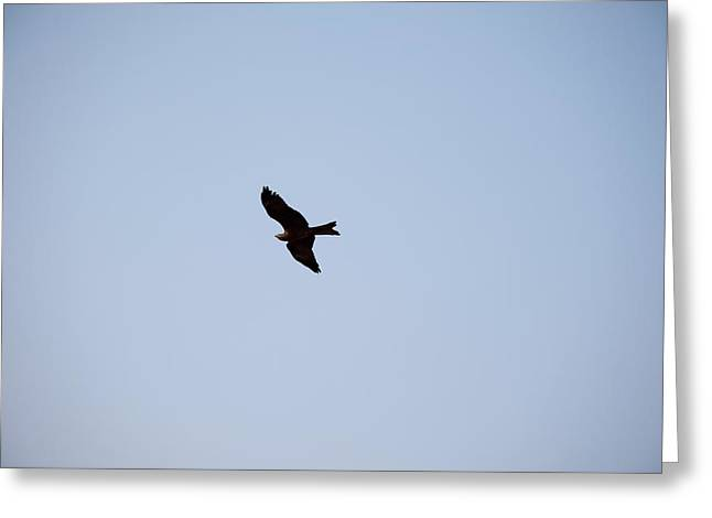 A Kite Flying High In The Sky Greeting Card by Ashish Agarwal