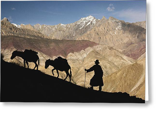 A Ladakhi And Pack Donkeys Pause Greeting Card by
